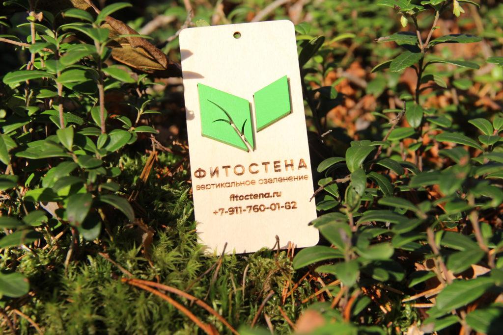 Визитка студии озеленения Фитостена