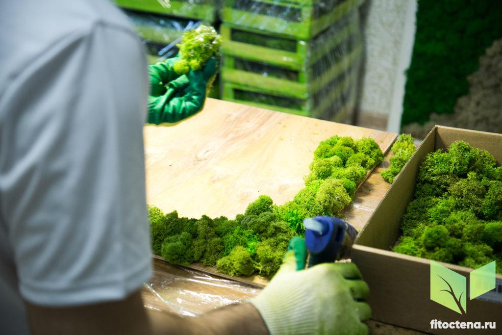 Как клеить стабилизированный мох