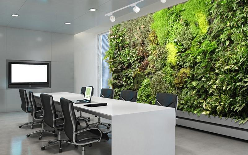Фитостена из живых растений. Озеленение офиса. Вертикальное озеленение