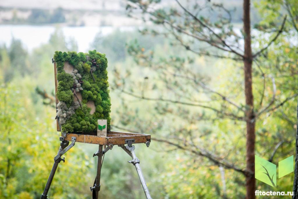 Стабилизированный мох. Фитостена. Вертикальное озеленение офисов интерьеров.